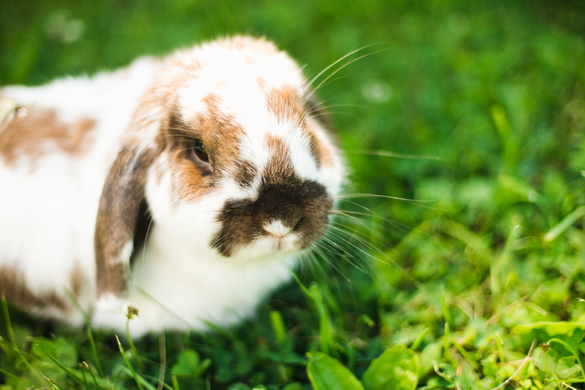 Rory the Courageous Bunny